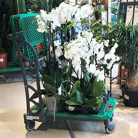 Chariots dédiés aux fleuristes